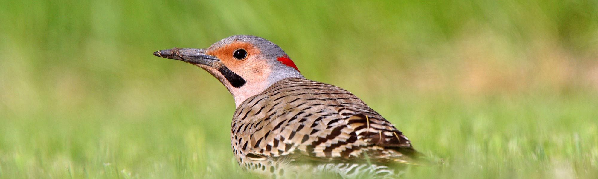 how to prevent woodpeckers from damaging your house